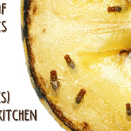 Tips for getting rid of fruitflies